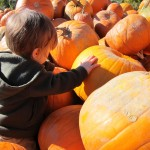 Abby Hill Farms Country Market (or that day Boo fondled a pumpkin)