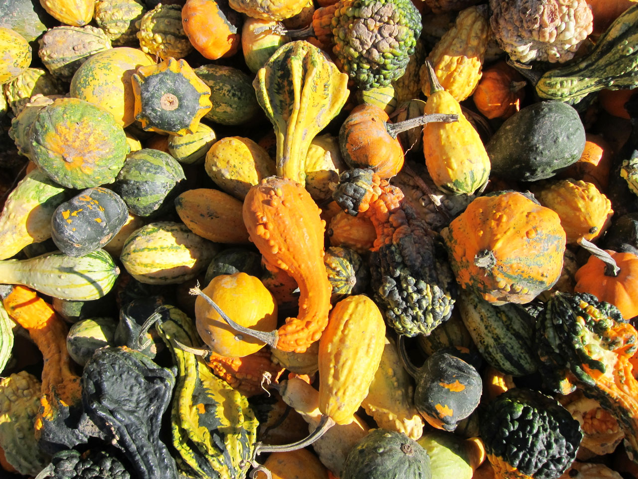 Multicoloured gourds