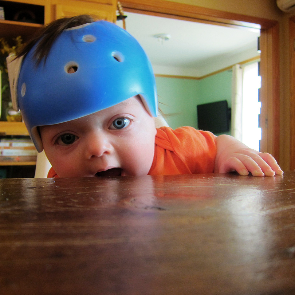 Boo wearing his helmet at the kitchen table