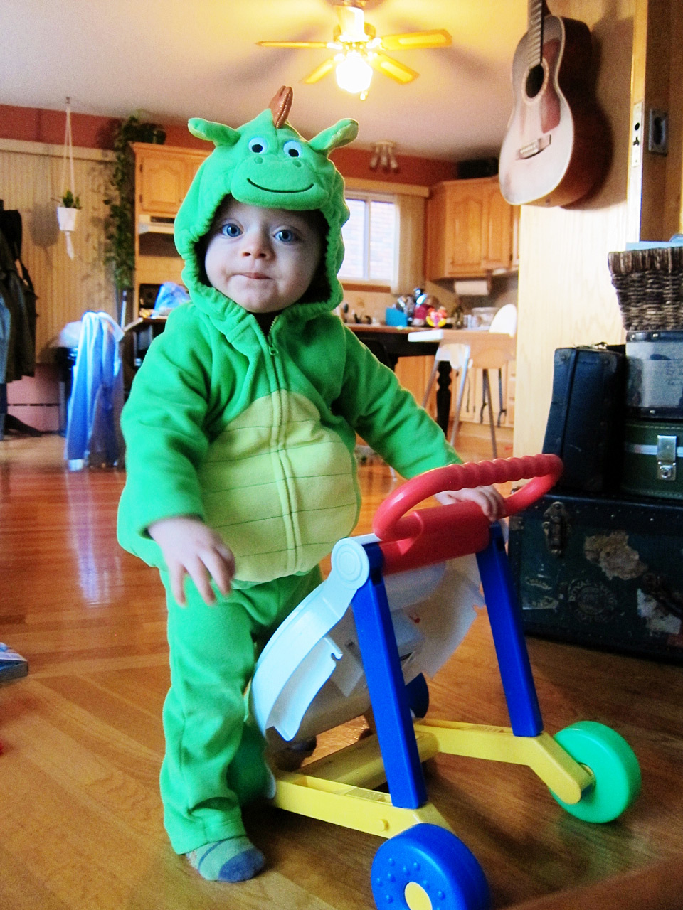 Boo Boo the dragon and his walker