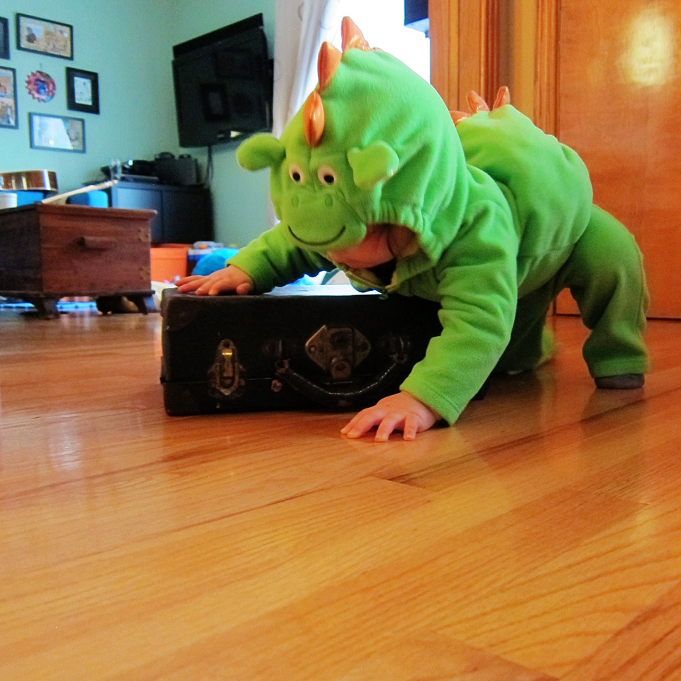Boo Boo the dragon crawling
