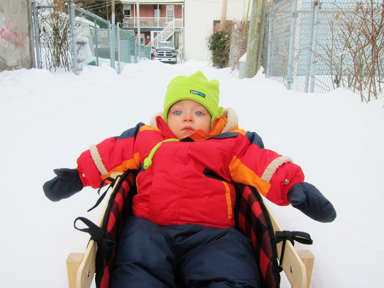 Boo Boo sitting in his sled